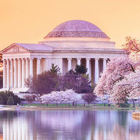 Washington, D.C. Cherry Blossoms
