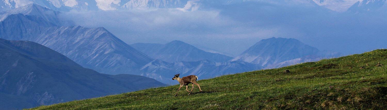 Alaska National Parks Land Tour