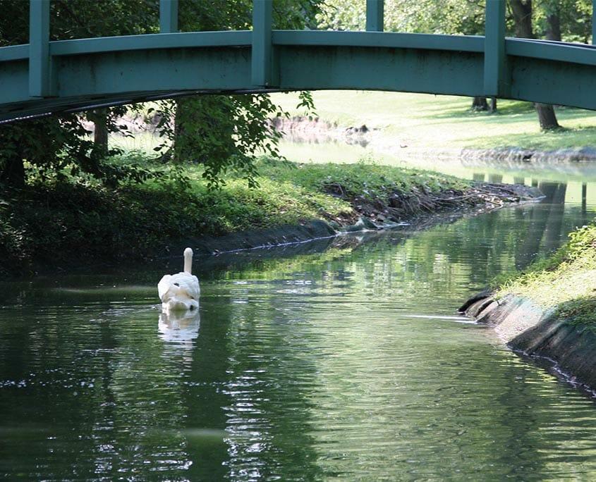 Windsor Under the Bridge